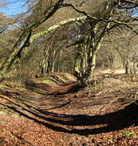 Hengrove Wood - ancient semi-natural woodland